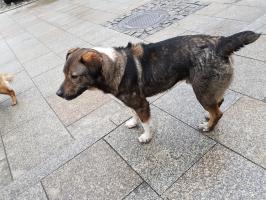 Stary Sącz i okoliczne gminy - kto robi interesy na bezdomnych psach