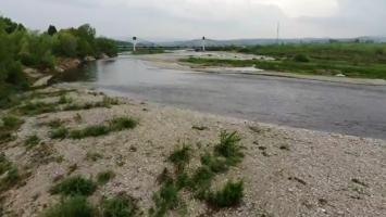 Śnięte ryby w Starosadeckich Stawach - ciąg dalszy - ryby w Dunajcu